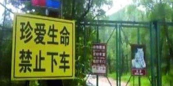 责令北京八达岭野生动物园立即停业,配合调查,进行整顿,确保旅游安全.