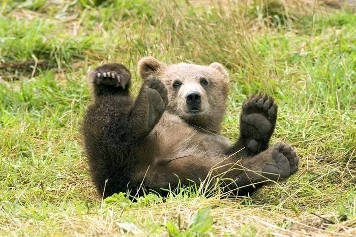 轻泥土手工制作熊猫