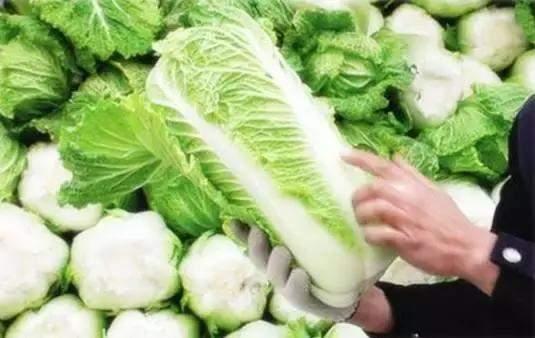 pt电子:白菜上的黑点到底是什么?