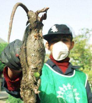 核污染下的动物变异