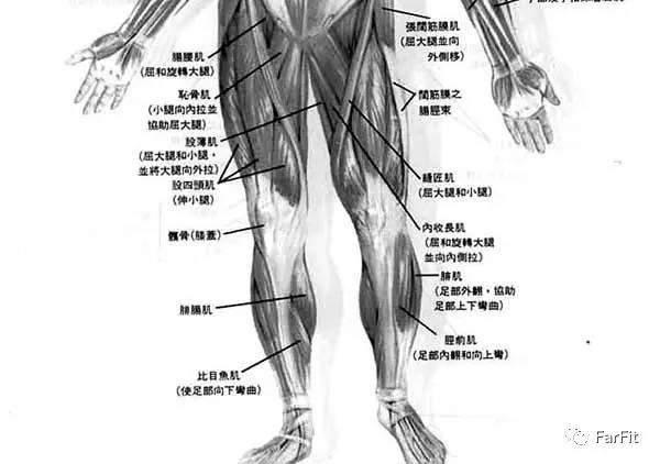 健硕的腿部肌肉是力量的象征, 7个动作强健你的腿部