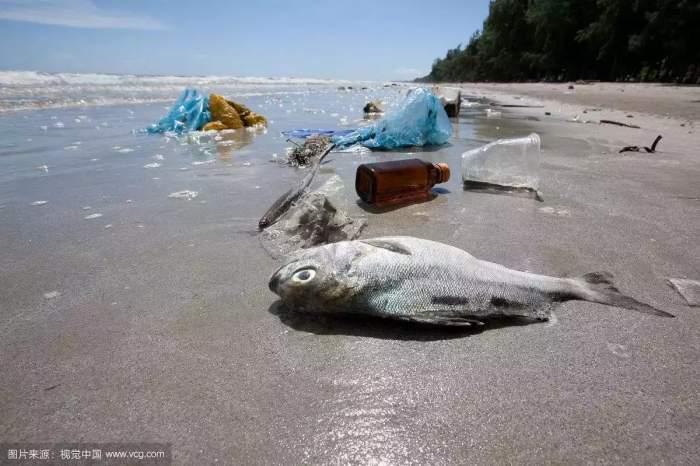 哪怕你并不居住在海边,塑料甚至有机会进入人体。华东师范大学施华宏研究小组的一篇研究论文,研究海盐、湖盐、岩盐里的塑料微粒含量。结果显示,海盐里的塑料微粒明显多于另外两种食用盐。海洋中,直径小于200m的塑料微粒很有可能会通过海盐的生产而进入日常生活,这是由于海盐生产商一般是通过海水蒸发,盐类结晶而得到海盐,这一过程当中,细微的塑料颗粒并不能被分离在外。