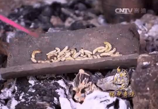 美丽乡村之拉祜族人的美食!
