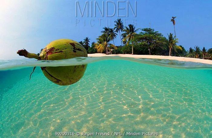 荒岛求生靠什么,或许……是一颗椰子?