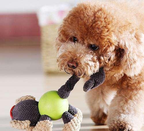 宠物与生活-如何提升狗狗对玩具的热度|狗玩具