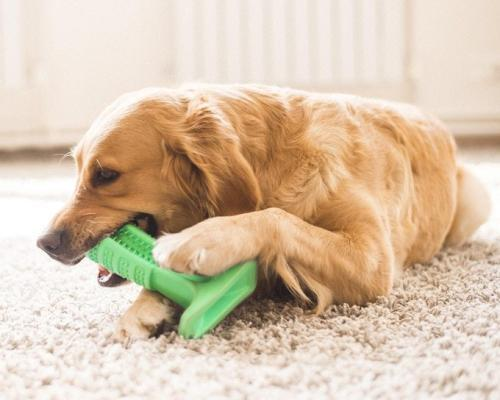 宠物店加盟-狗狗口腔疾病的预防与治疗