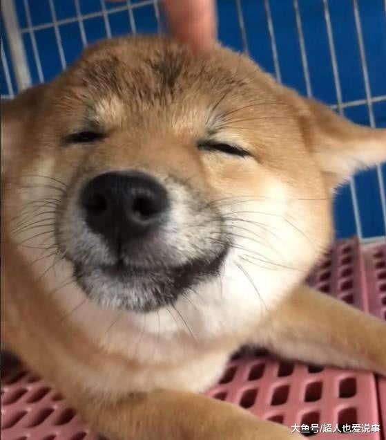 宠物与生活-网购一宠物狗,打开一看笑翻了
