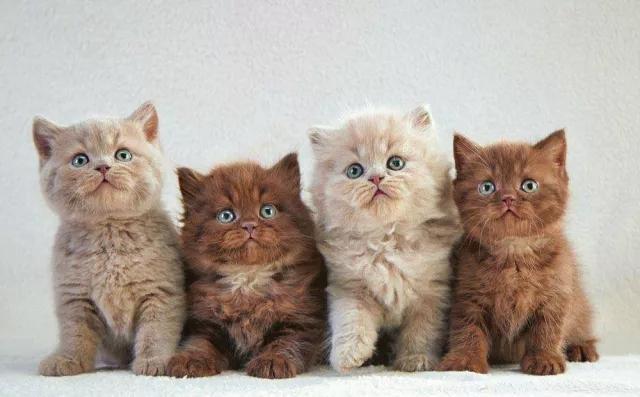 宠物咨询-给猫咪绝育到底是对猫好还是害了它?