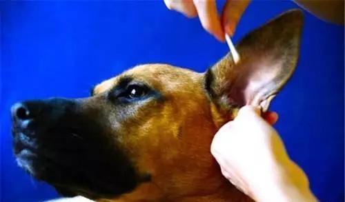 宠物医院-狗狗的日常护理
