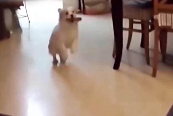 宠物咨询-狗狗天生爱啃骨头