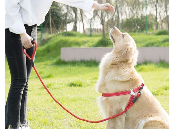 宠物咨询-新手养宠物需要注意些什么事项