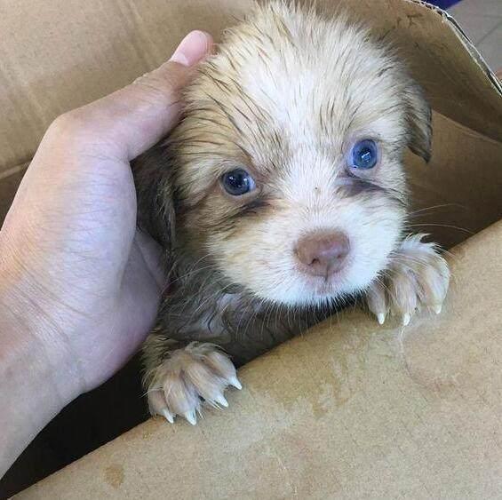 宠物求助中心-女子捡到流浪小奶狗,去宠物医院打疫苗,医生大惊:狗...