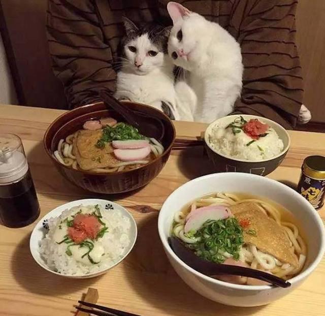 宠物与生活-养猫注意事项,猫也会学人坐着吃饭了