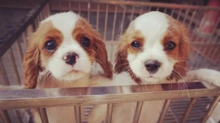 宠物店加盟-狗狗得了皮肤病怎么办,该怎么治疗呢?