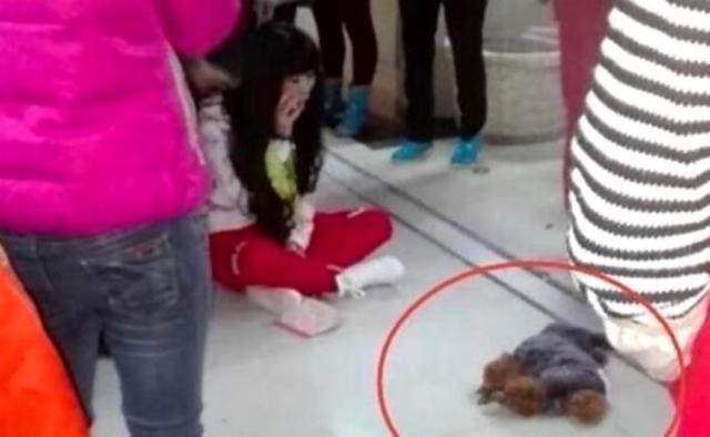 宠物医院-出来遛狗引发的悲剧