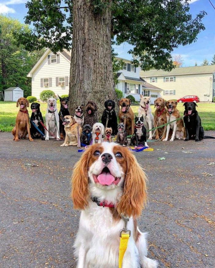 宠物与生活-如何培养遛狗的习惯