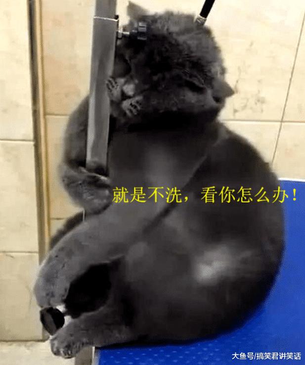 宠物店加盟-分享猫咪去宠物店洗澡趣事