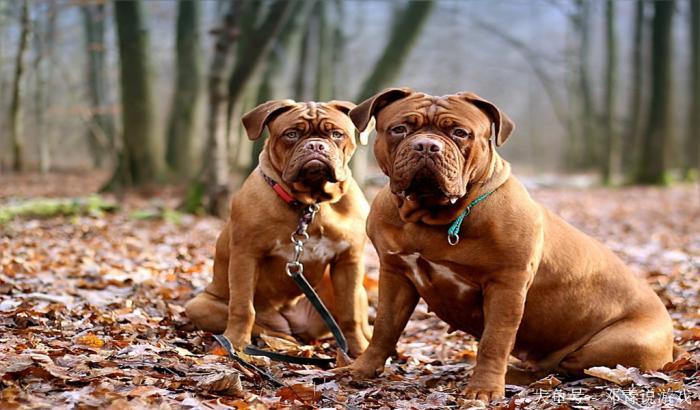 宠物咨询-为什么要绝育狗?了解狗是如何绝育的?
