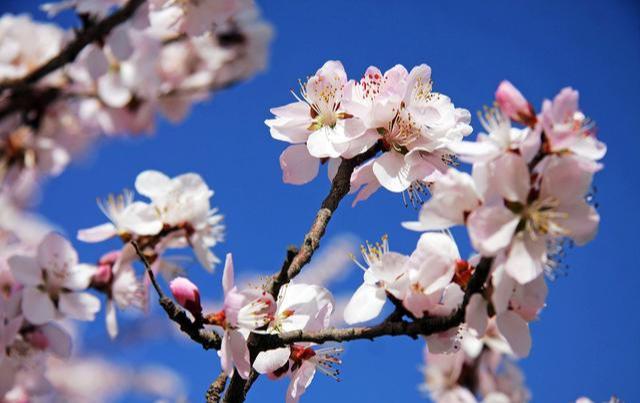 """春季养生先养阳,三种""""耗阳""""的事少做,做好四件事,阳气更充沛"""