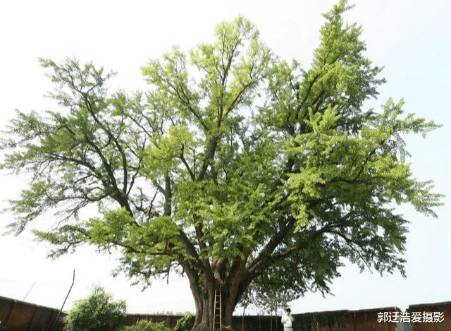 凭感觉选一棵树,测你心里最重要的人是谁