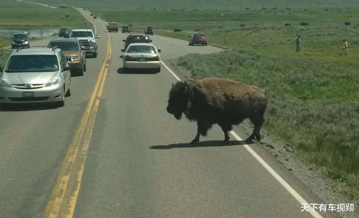 开车撞到小动物忌讳吗,开车压死小动物