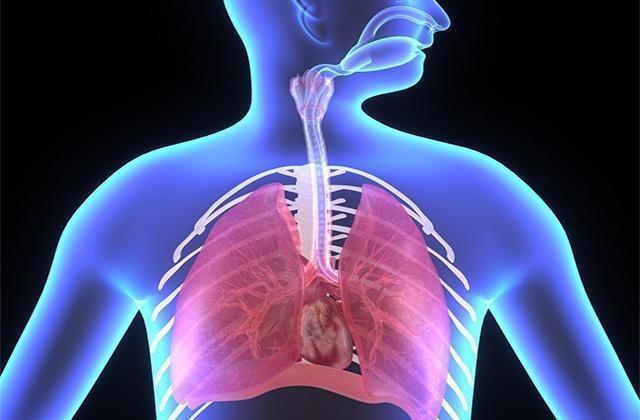 菊花配此物,每天煮水喝,止咳祛痰,緩解喉嚨干癢,擺平支氣管炎
