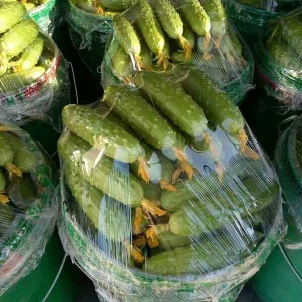 网传反季节蔬菜不健康?假的 可以放心食用