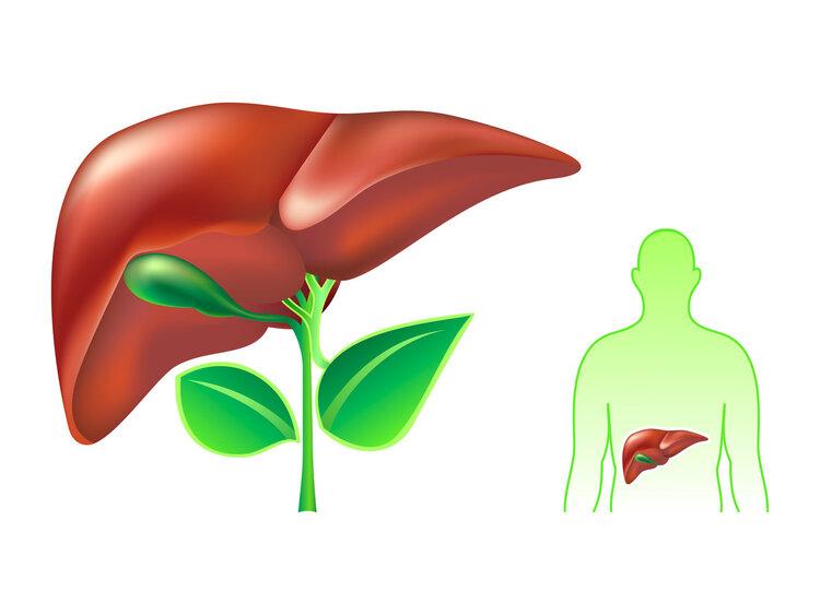 从肝硬化到肝癌需要多久?专家:别慌,中医3大妙招治疗肝硬化有