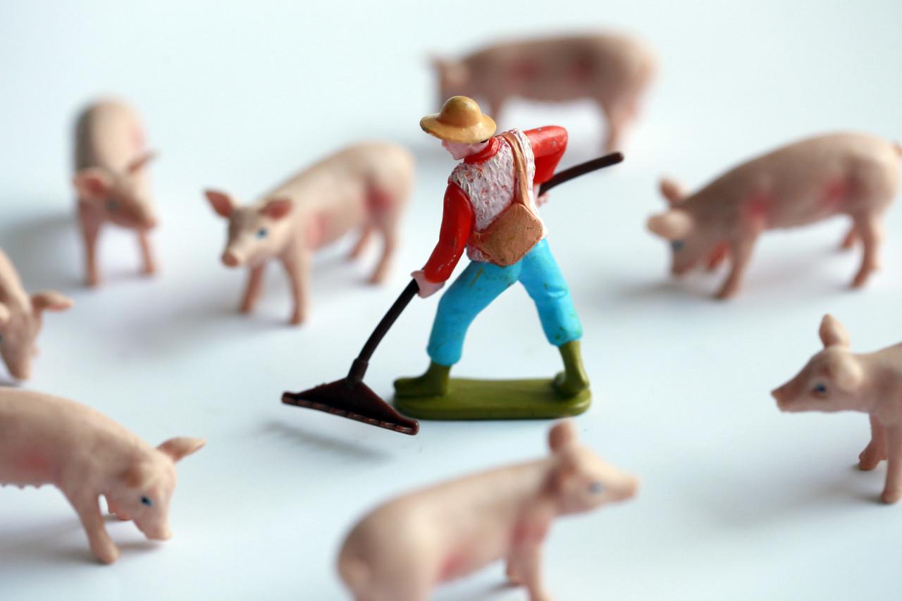 猪肉价格暴涨35%,1天涨1块,会涨到40元吗?还能投资吗?