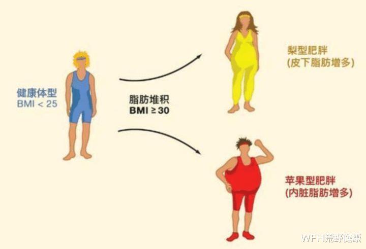 荒野健康:去除内脏脂肪,跑步是不是最好的方法?