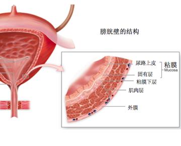 带状疱疹是由病毒感染造成,它具有亲神经性,并且会引起炎症反应