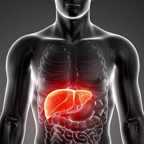 吃药到底是伤肝还是伤肾?