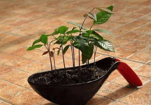 哪些水果籽可以种盆栽 不用再花钱买盆栽, 水果籽就可以种, 水果籽