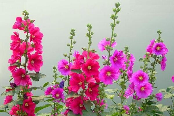 这几种很好种植的花,而且花开得很艳