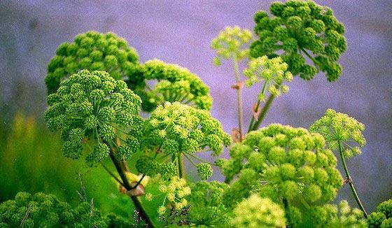 这几种植物市场前景好, 亩收益过万