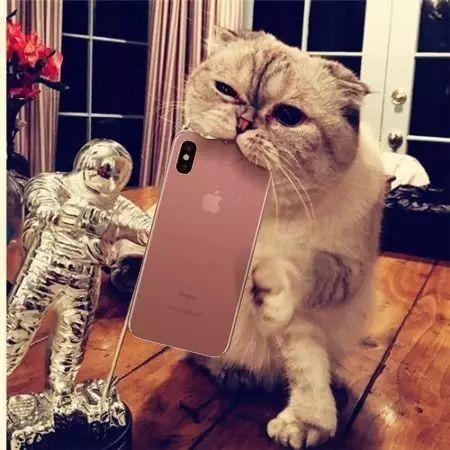 壁纸 动漫 动物 卡通 漫画 猫 猫咪 头像 小猫 桌面 450_450