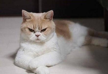 """猫狗不如!一条狗月入九万元,""""生气猫""""在instagram竟收获19万多名粉丝?图片"""