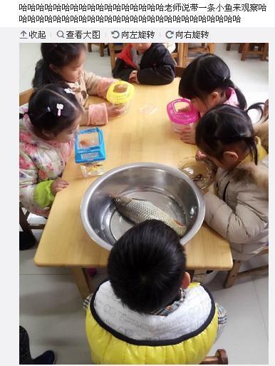 幼儿园带鱼孩子刷爆网络成网红 爸爸耿直回应甩锅孩子