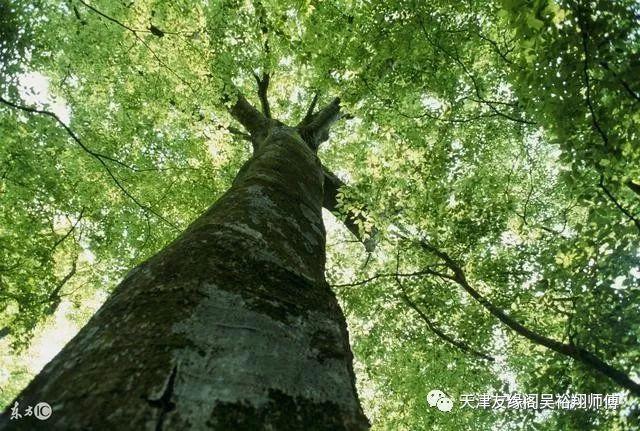 甲木是参天大树,它的寿命长达百年之久,木老则空,有水润则可长久.
