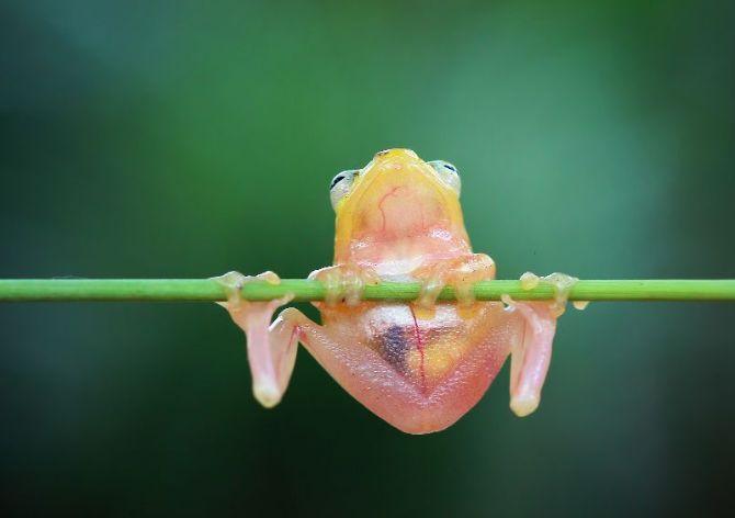 青蛙王子化身体操王子, 单杠双杠技术都不错