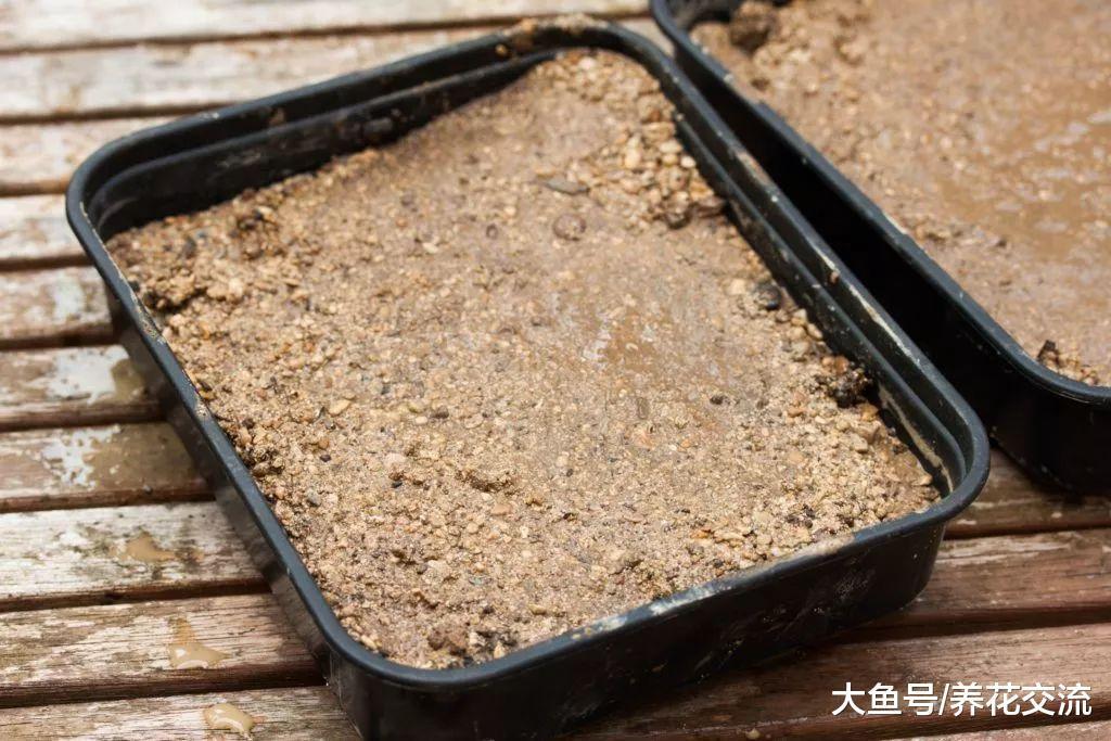 多肉植物和仙人掌用种子繁殖, 一个盆就能长上