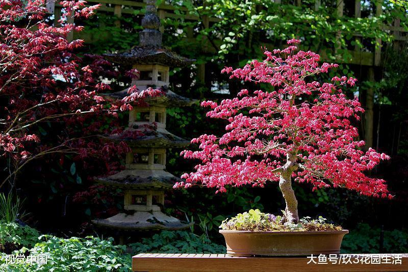 树木盆景常见的几种表现形式(一)