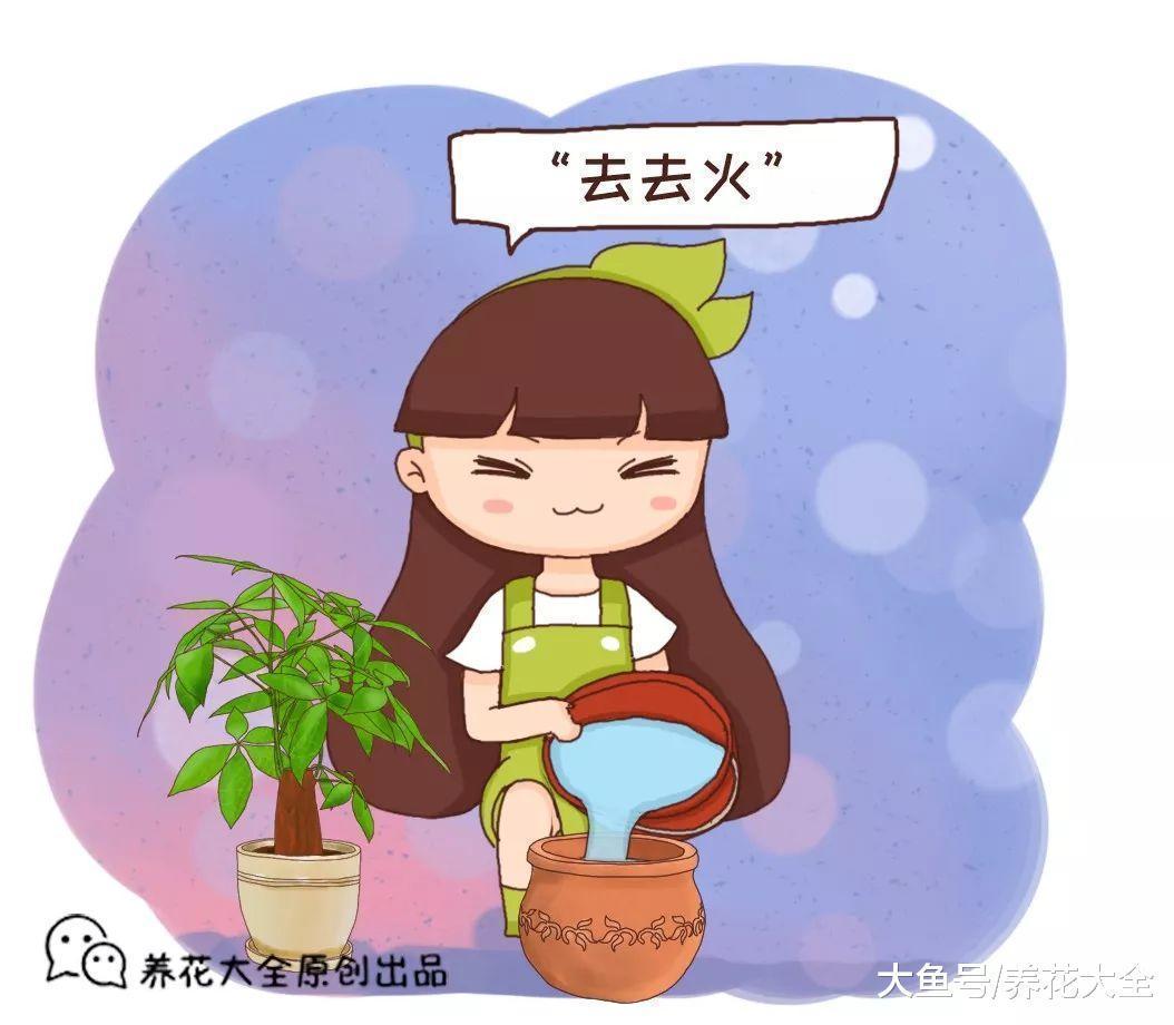 新买的花盆不能立马用, 不处理一下, 养啥死啥