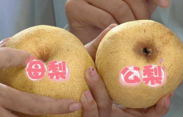 """原来水果也分""""公母"""",母水果比公水果好吃百倍,不会选就亏大了!"""