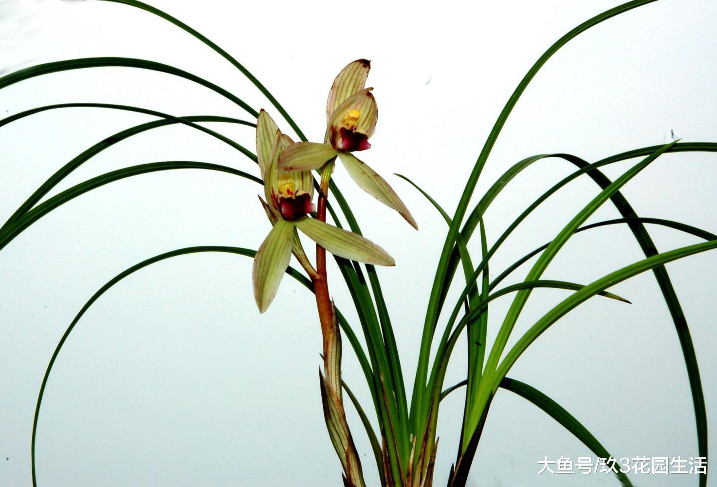 兰花适合在哪个时间种植?