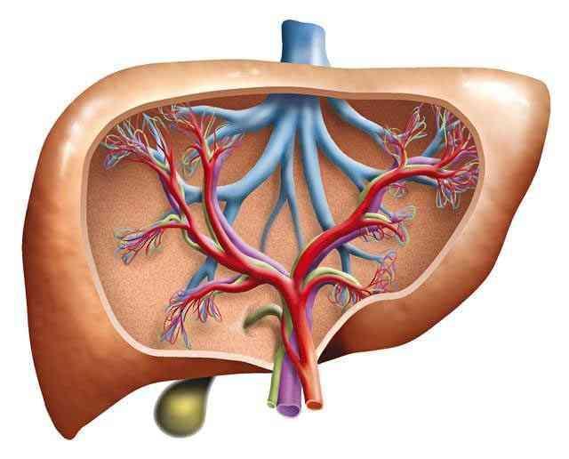 """肝病的""""大救星""""来了, 常吃这几种碱性食物, 排除肝毒远离肝硬化"""