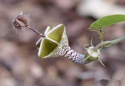 这些植物, 见过的人都要感叹一下大自然的鬼斧神工!