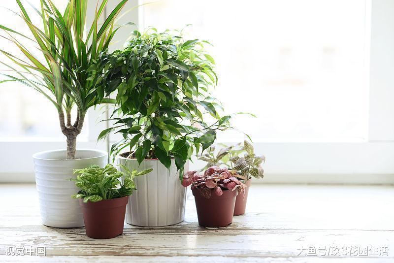 生长衰弱的绿植花卉应该如何特殊照护