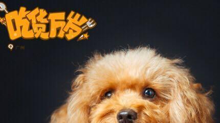 泰迪犬最讨厌主人做的5件事, 每一件, 都会让它伤心透了!