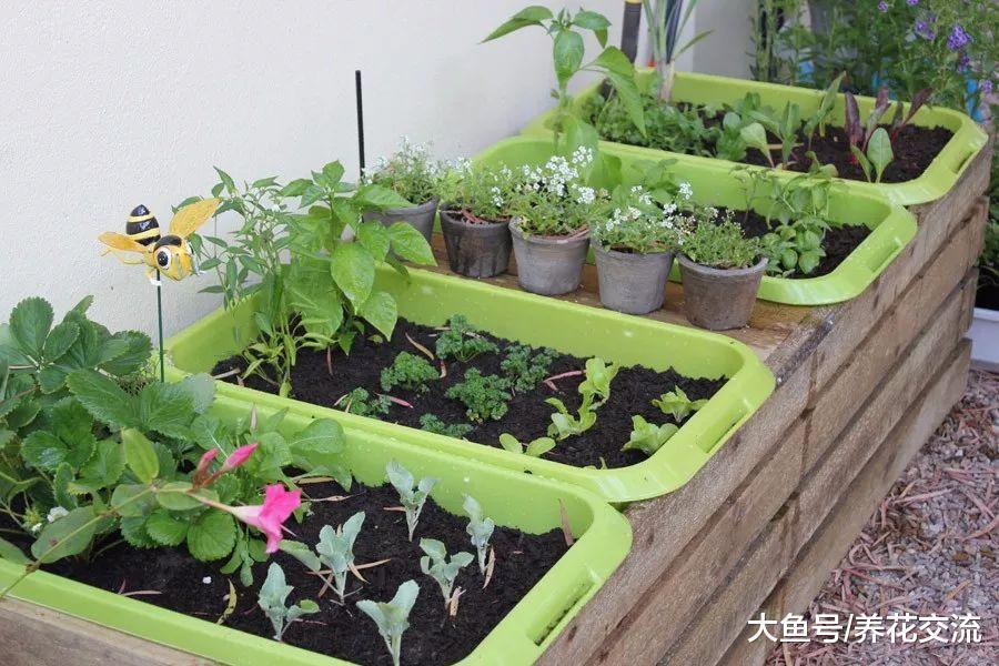 在花盆里也能生长旺盛的9种蔬果, 在阳台、窗台上养出小型菜园